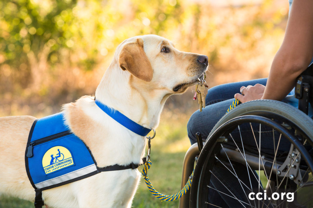Canine Companions for Independence Assistant Dog