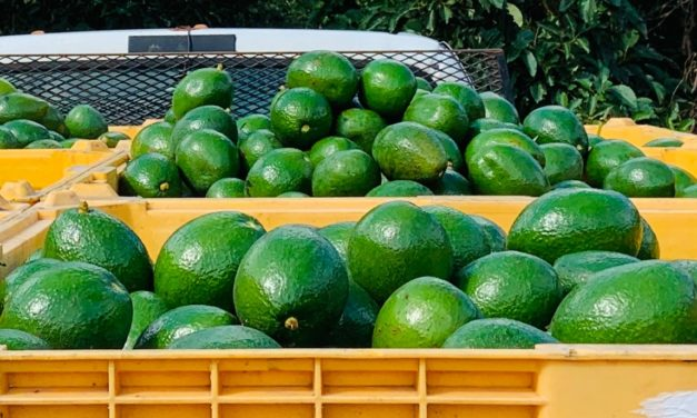 Sleepy Lizard Avocado Farm: Tips on Launching a Home Business