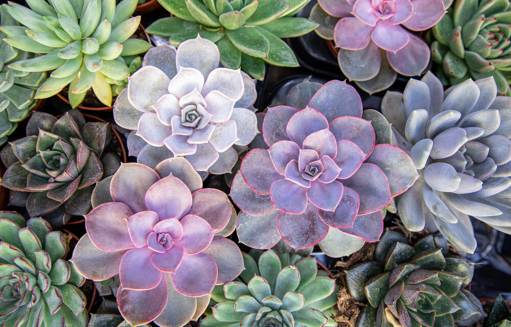 9 Helpful Gardening Apps to Augment Your Green Thumb